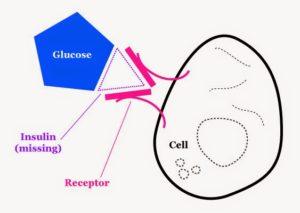 Исследования же указывают на то, что при повышенном уровне инсулина нарушается процесс созревания яйцеклетки и затрудняется её выход из яичника.