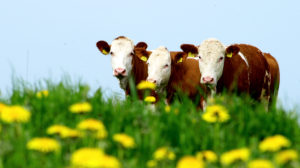 Био-Молоко содержит больше Омега-3