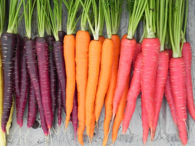 Морковь - продукт от старения , чем богата:каротиноиды, бетакаротин, клетчатка, витамины А, К и С.