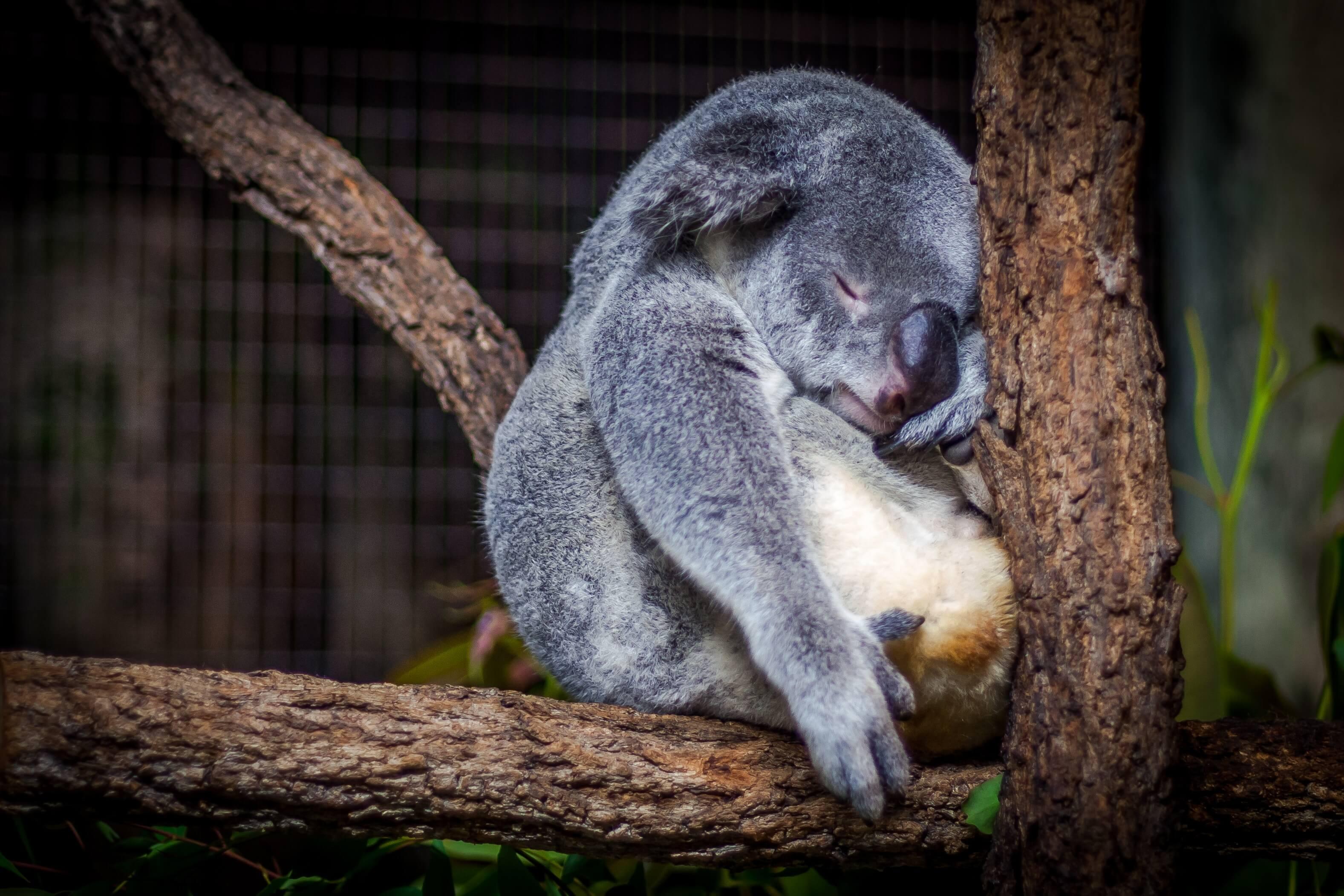 Как побороть усталость - советы нутрициолога Екатерины Йенсен